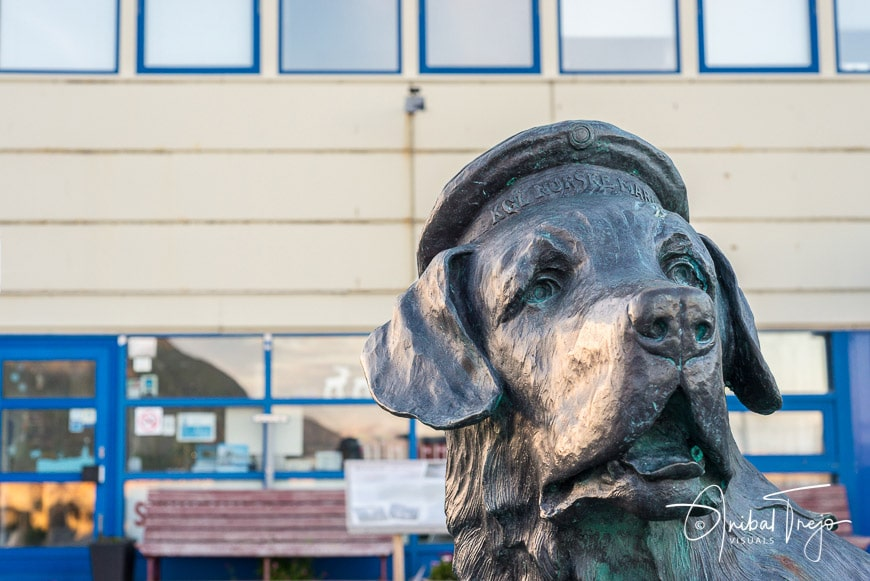 Statue of Bamse in Honningsvåg, a St. Bernard that became the heroic mascot of the Free Norwegian Forces during the Second World War in Honningsvag, Norway.